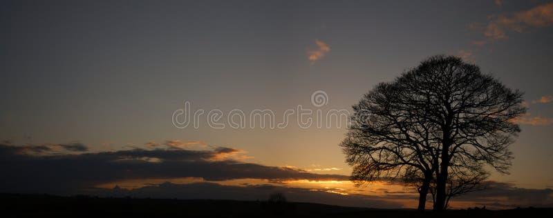 Arbre isolé dans le coucher du soleil (district maximal - Angleterre) image stock
