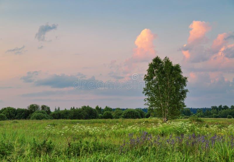 Arbre isolé dans le domaine d'été sous le ciel de coucher du soleil photographie stock