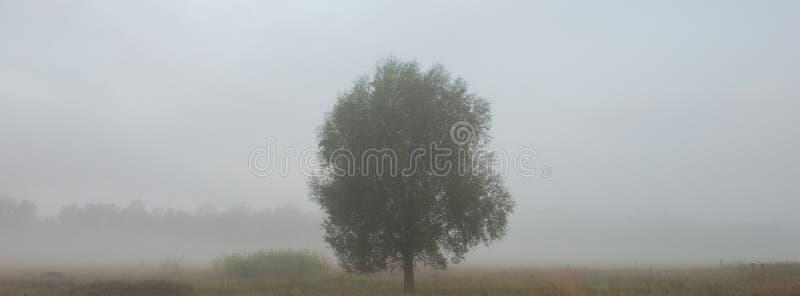 Arbre isolé dans le pré dans la période brumeuse de la saison d'été photographie stock