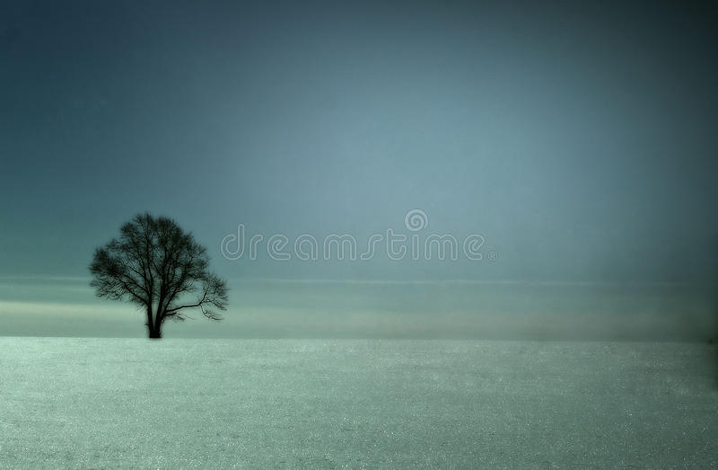 Arbre isolé dans un domaine en hiver photo stock