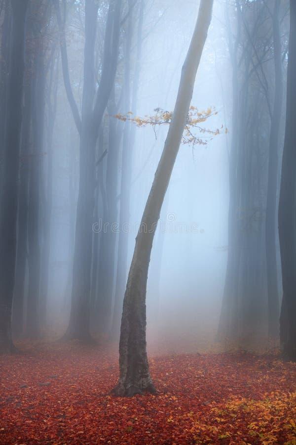 Arbre isolé dans une forêt brumeuse photo libre de droits