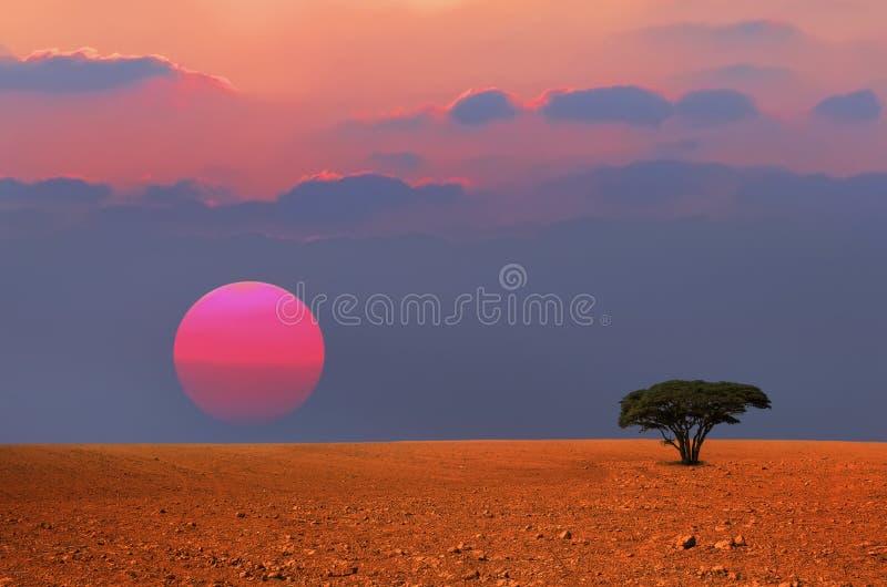 Arbre isolé de coucher du soleil photographie stock