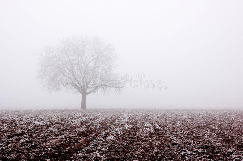 Arbre isolé en hiver photo libre de droits