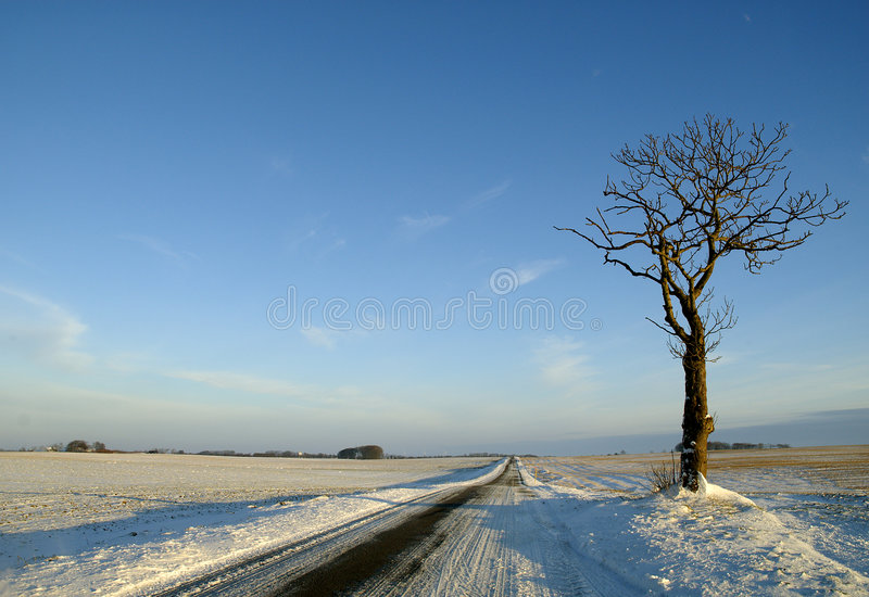 Arbre isolé en horizontal de l'hiver photo stock
