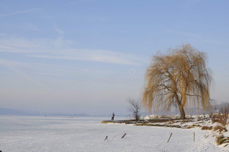 Arbre isolé près du lac congelé dans le jour froid d'hiver images libres de droits