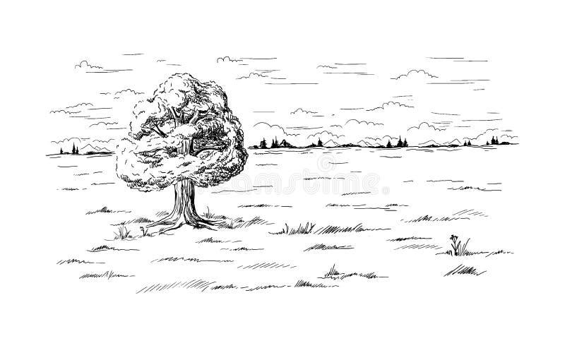 Arbre isolé se tenant au milieu du champ illustration libre de droits