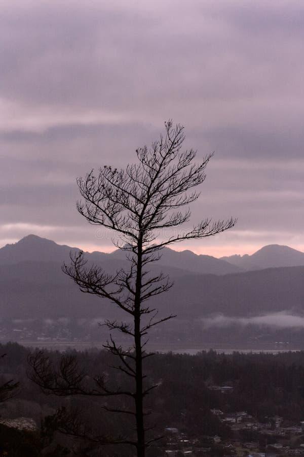 Arbre isolé simple sur une haute colline avec un beau fond naturel images stock