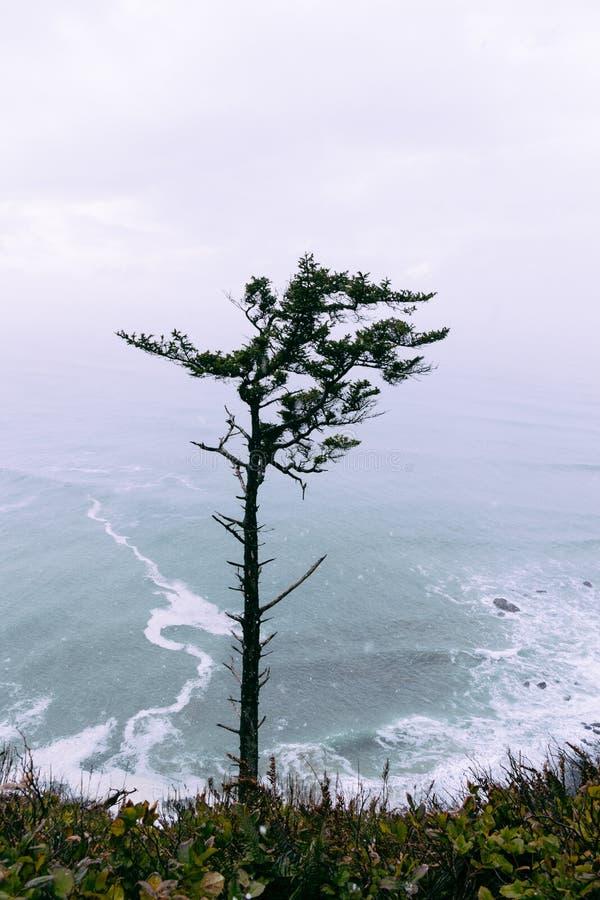 Arbre isolé simple sur une haute colline avec un beau fond naturel photo stock