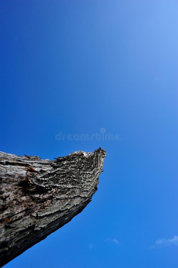 Arbre isolé sous le ciel bleu photo libre de droits