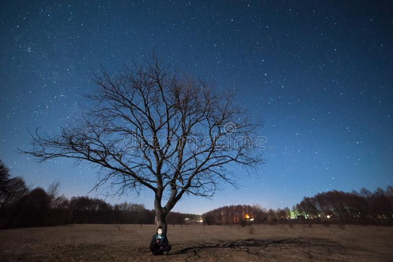 Arbre isolé sur le pré et étoiles en ciel photographie stock libre de droits