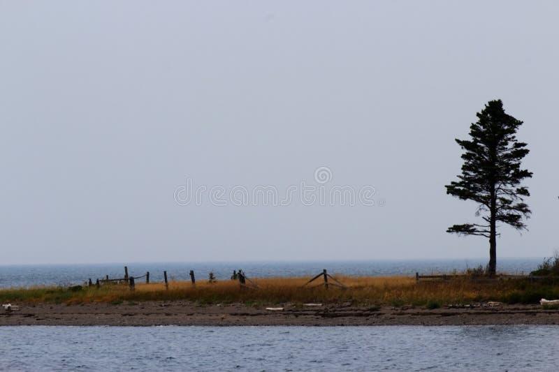 Arbre isolé sur un bout droit d'île photo libre de droits