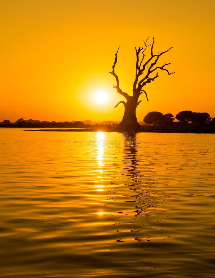 Arbre isolé sur une rivière photos libres de droits
