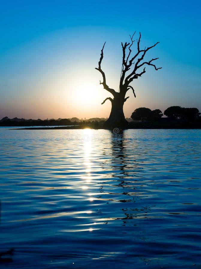 Arbre isolé sur une rivière images stock