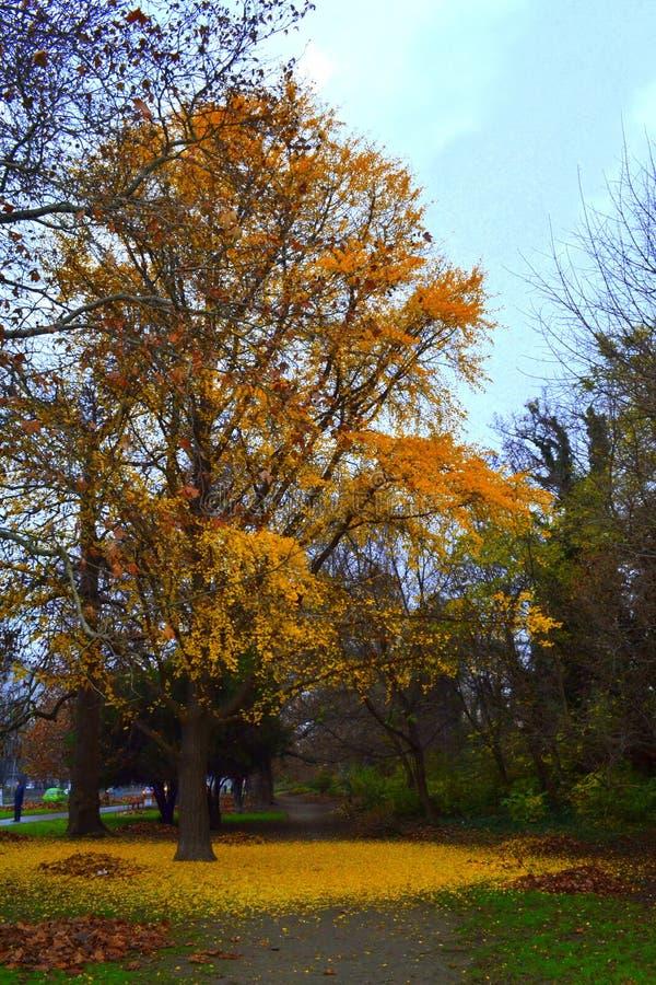 Arbre jaune lumineux photo libre de droits