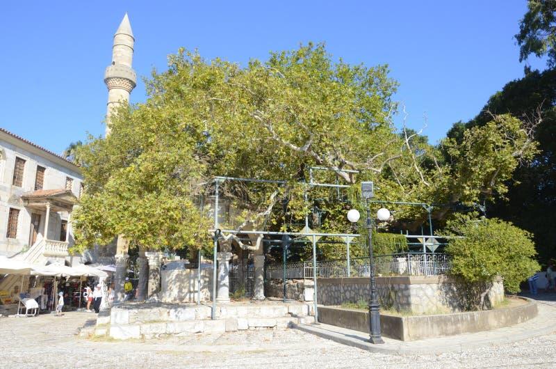 Arbre Kos, Grèce de Hippocrate photographie stock