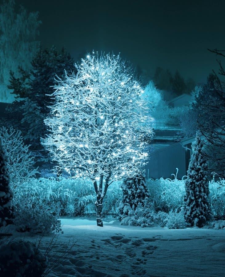 Arbre lumineux dans le jardin d'hiver photo stock
