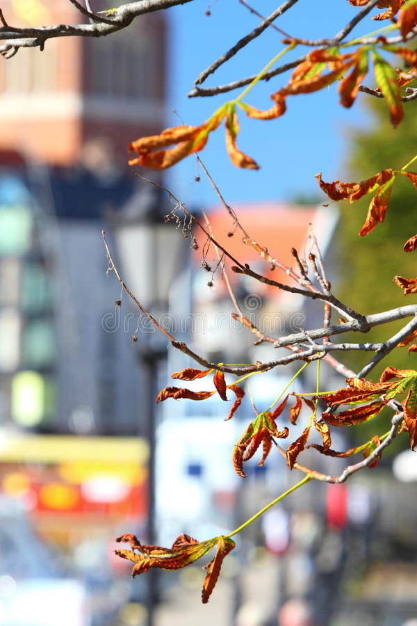 Arbre lumineux de marron d'Inde de feuilles d'automne photographie stock libre de droits