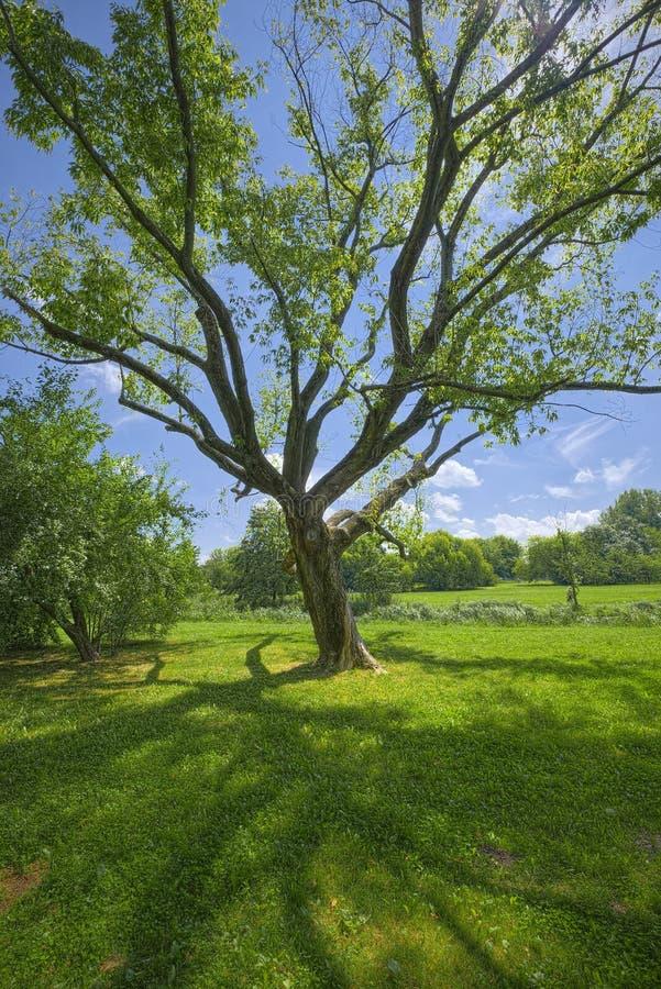 arbre majestueux moulant une ombre photo stock image du bleu arbre 50755390. Black Bedroom Furniture Sets. Home Design Ideas