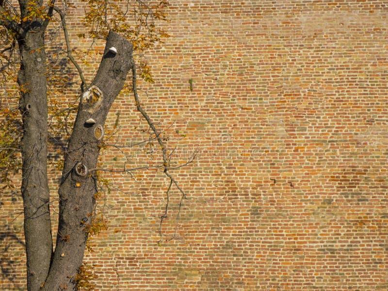 Arbre merveilleux à côté d'un mur de briques coloré photographie stock