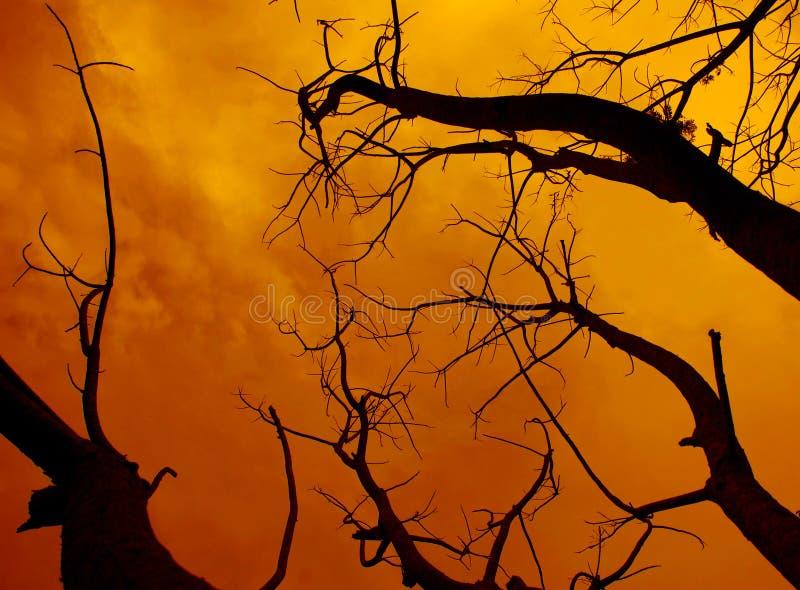 arbre mort avec un ciel rouge effrayant surréaliste pour Halloween image libre de droits