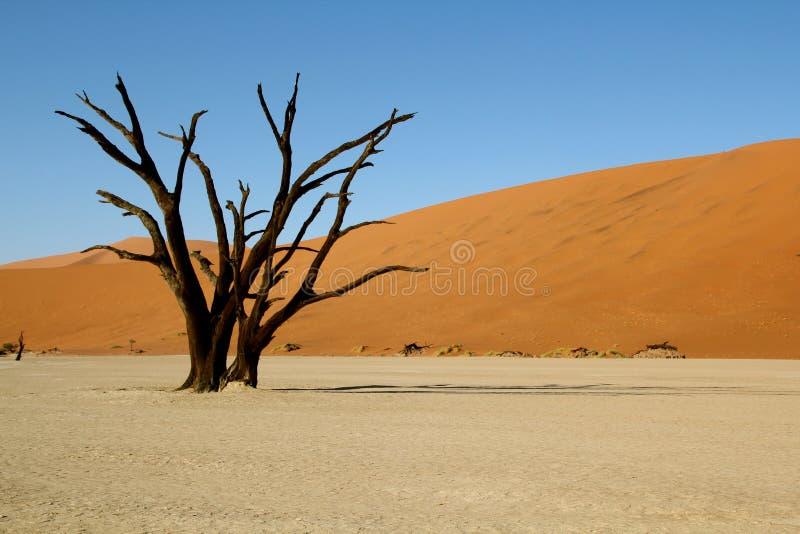 Arbre mort dans le désert photo libre de droits