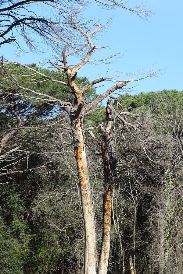 Arbre mort dans une forêt photographie stock