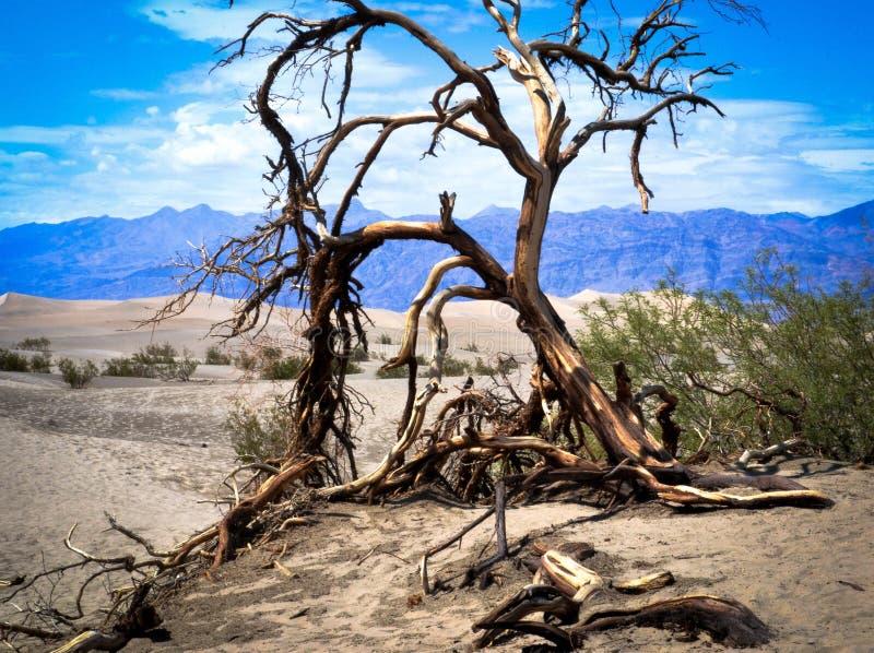 Arbre mort Death Valley images libres de droits