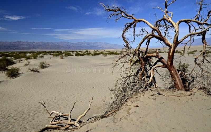 Arbre mort Death Valley, la Californie, Etats-Unis images stock