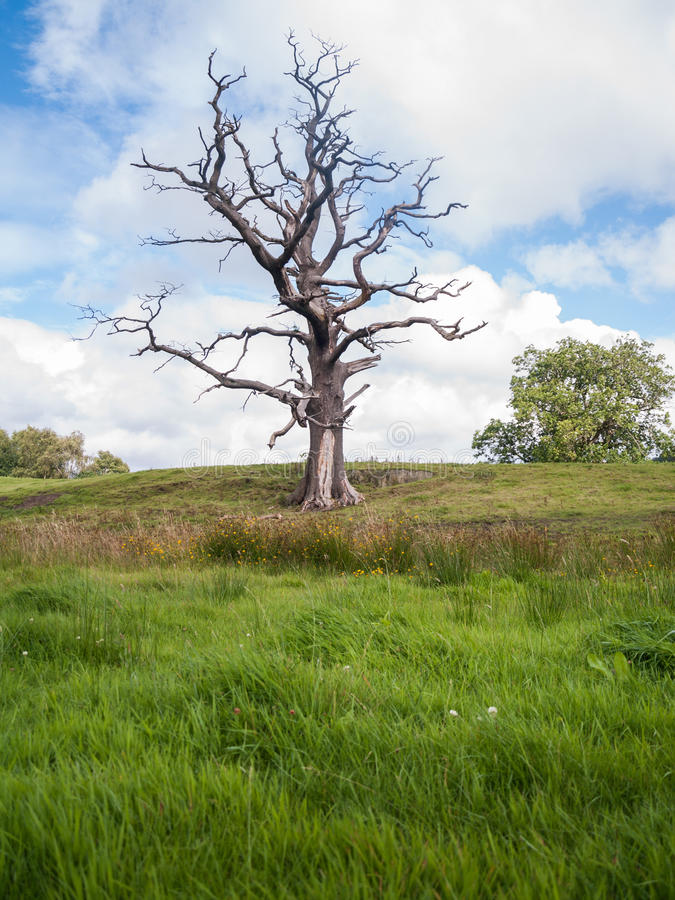 Arbre mort fantasmagorique isolé dans un domaine d'herbe verte photos stock