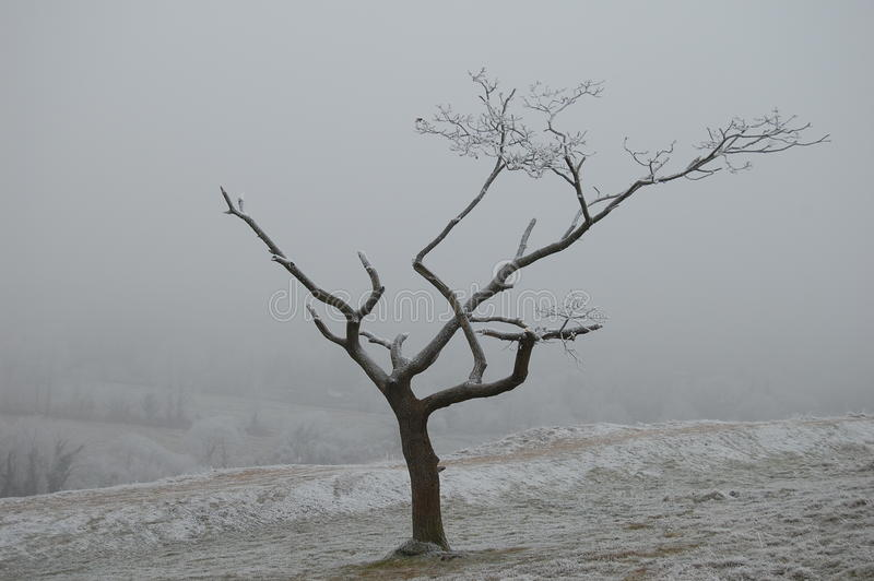 arbre mourant image stock