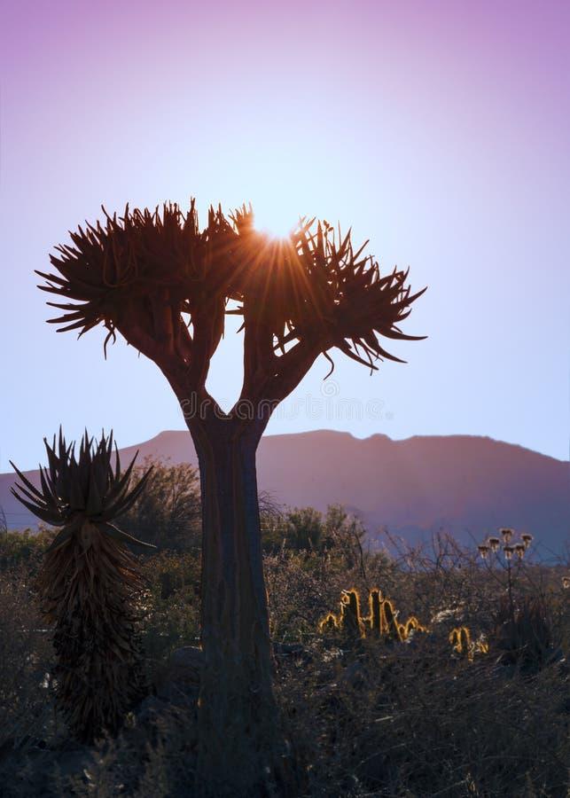 Arbre Namibie de tremblement de coucher du soleil photos stock