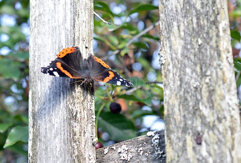 Arbre, nature, insecte, animal, papillon, oiseau, sauvage, rouge, écureuil, faune, pivert, macro, ressort, branche, dehors, mouch photos libres de droits