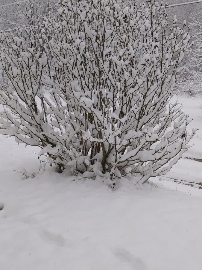 arbre neigeux photo libre de droits