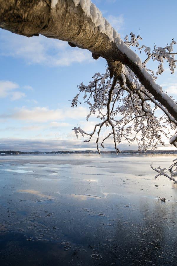 Arbre neigeux tombé et lac congelé en Finlande images stock