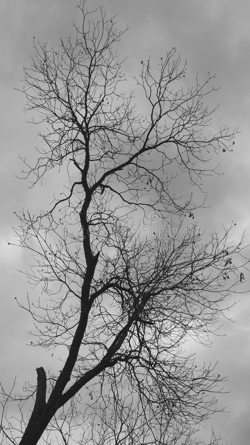 Arbre noir et blanc image libre de droits