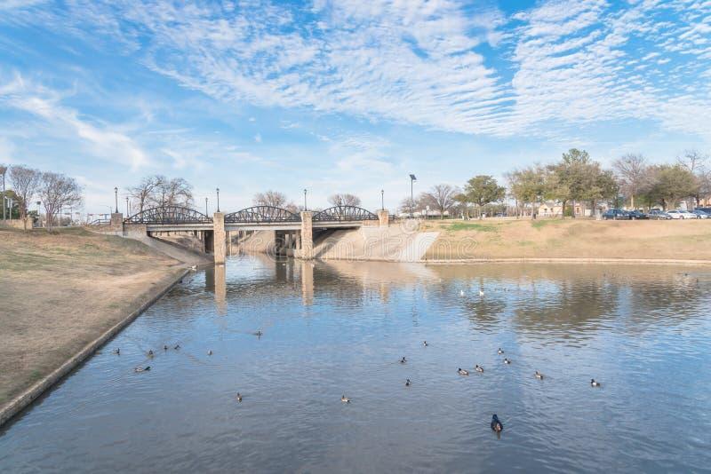 Arbre nu de parc urbain, nuage d'altocumulus, lac de fontaine dans le Texas, images libres de droits