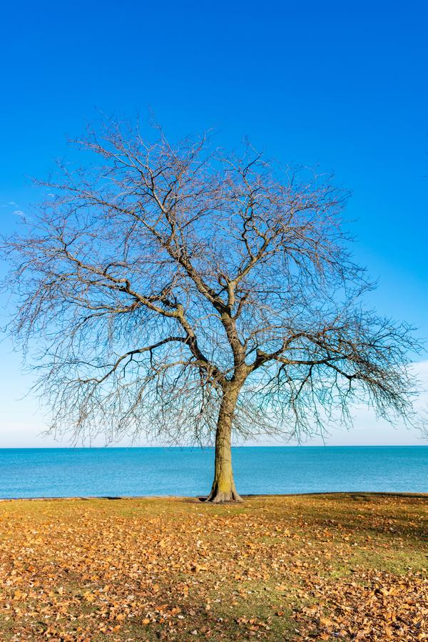 Arbre nu simple le long du rivage du lac Michigan Chicago images libres de droits