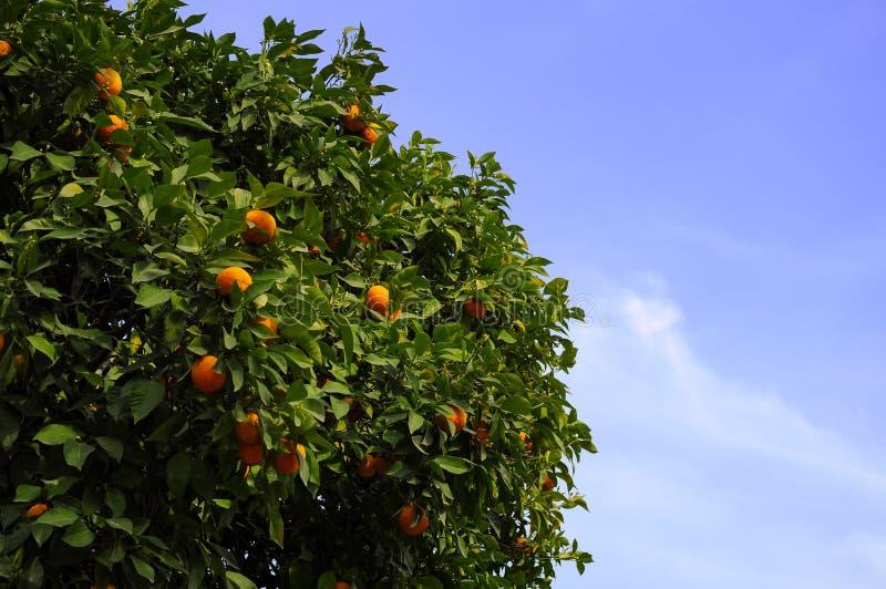 Arbre orange photographie stock