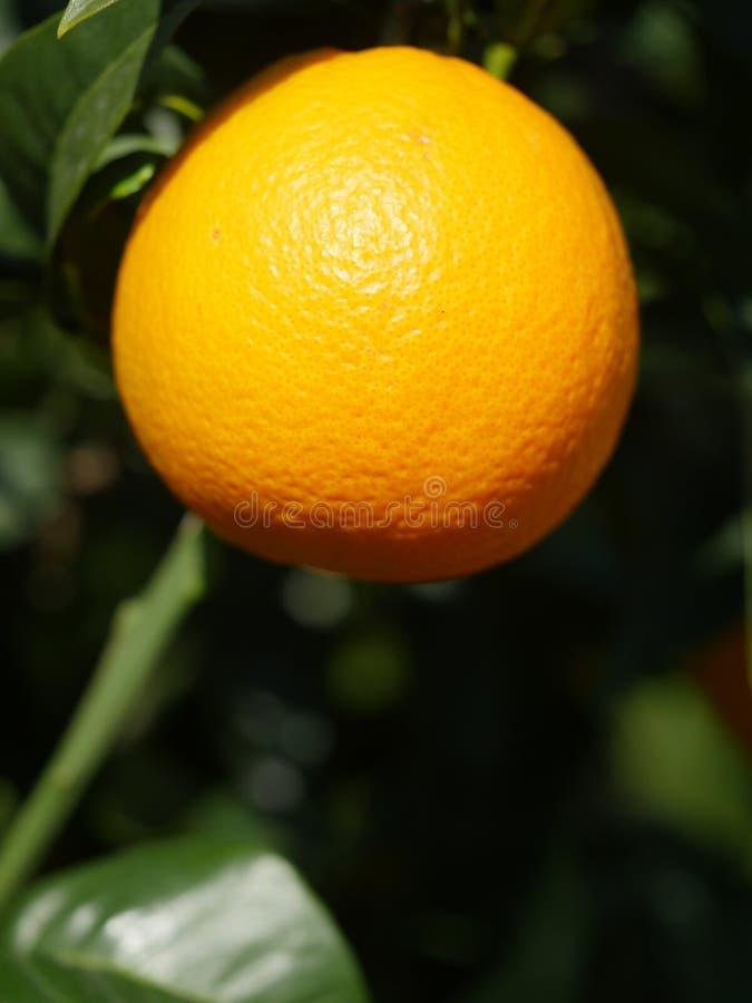 Arbre orange image stock