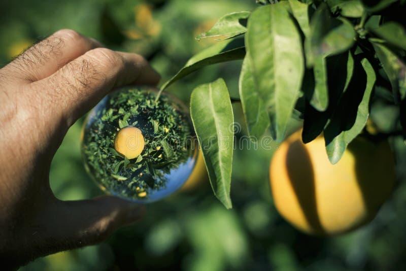 Arbre orange dans une boule de cristal images libres de droits