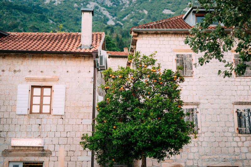 Arbre orange près de la maison en pierre photo libre de droits