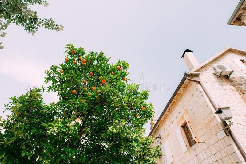 Arbre orange près de la maison en pierre photos stock