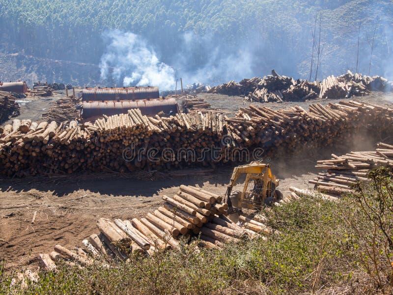 Arbre ouvrant une session le Souaziland rural avec les machines lourdes, le bois de construction empilé et la forêt à l'arrière-p image stock