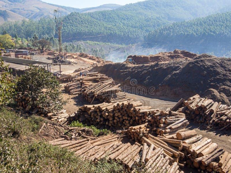 Arbre ouvrant une session le Souaziland rural avec les machines lourdes, le bois de construction empilé et la forêt à l'arrière-p images libres de droits