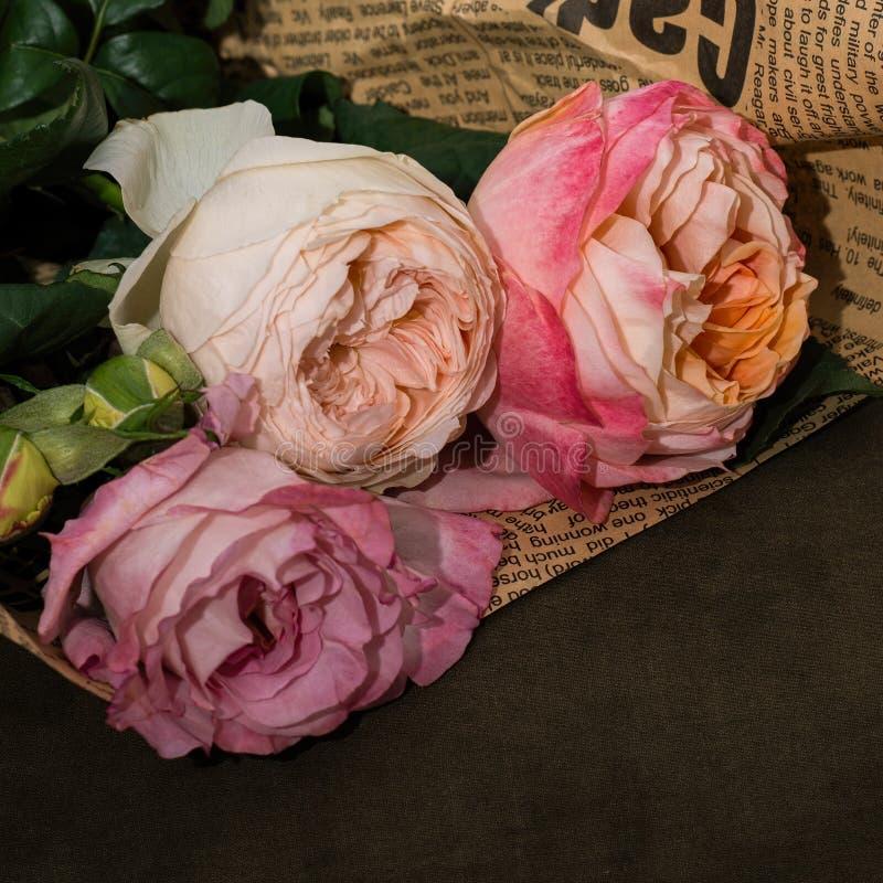 Arbre pâle - la rose de rose fleurit le plan rapproché image libre de droits