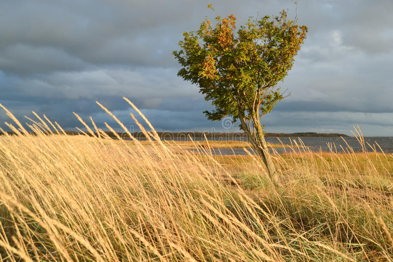 arbre par temps venteux photo libre de droits