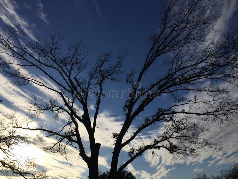 Arbre peignant le ciel image stock