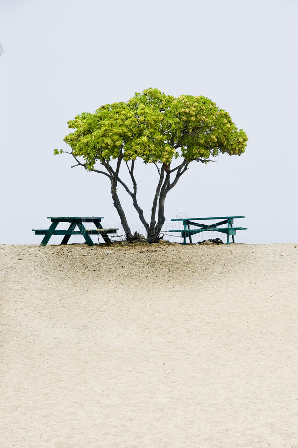 Arbre, plage et tables de pique-nique. photos stock