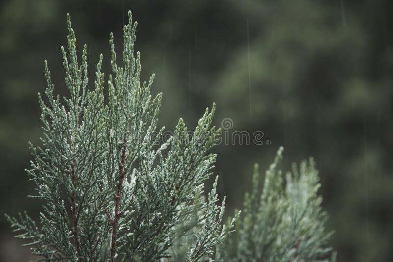 Arbre pluvieux photo libre de droits