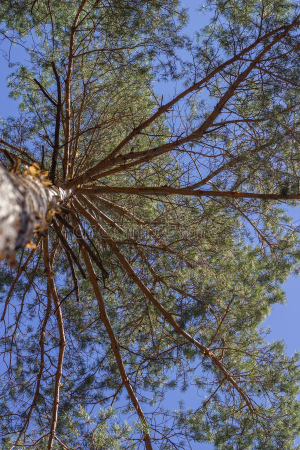 Arbre puissant nature photos stock